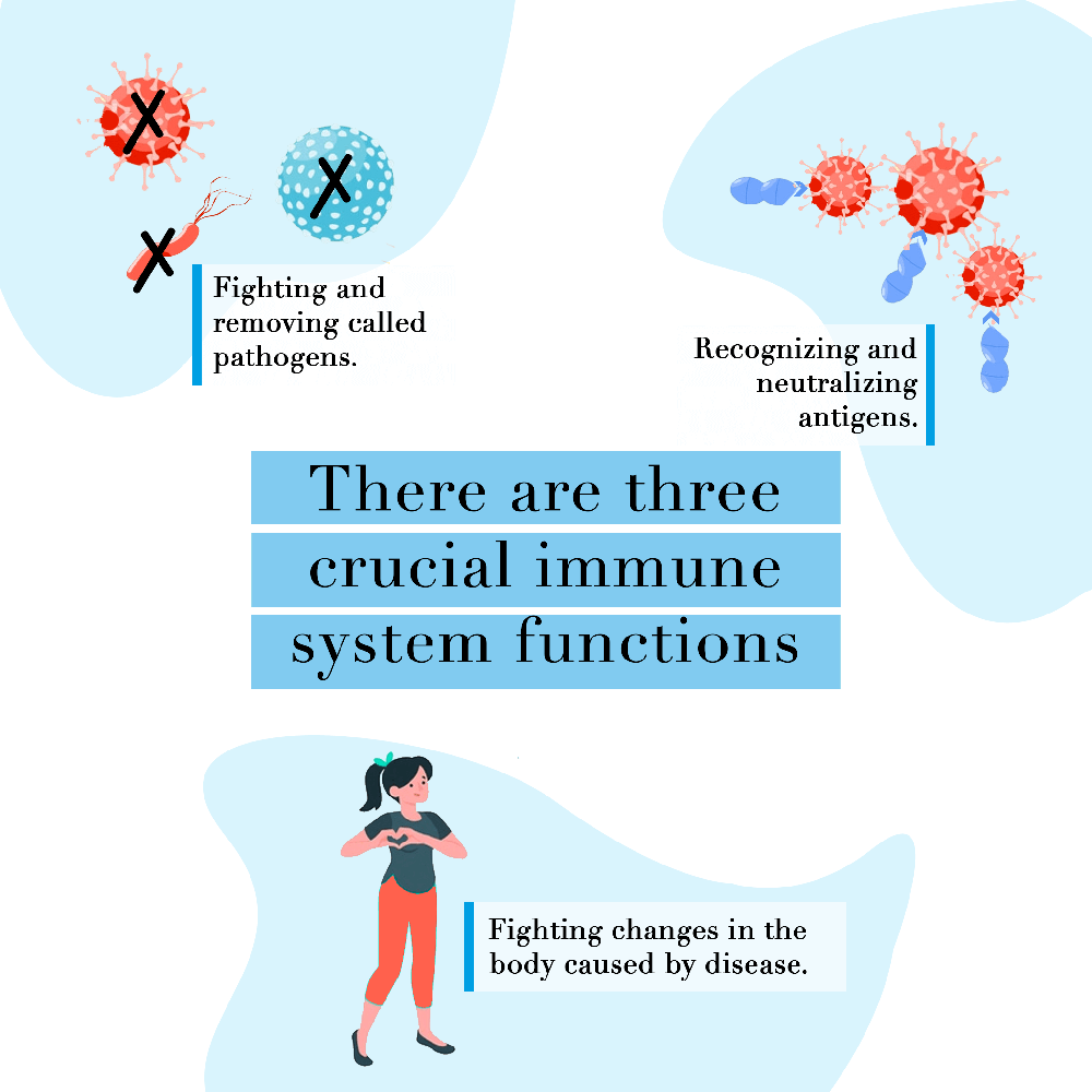 3 crucial immune system functions
