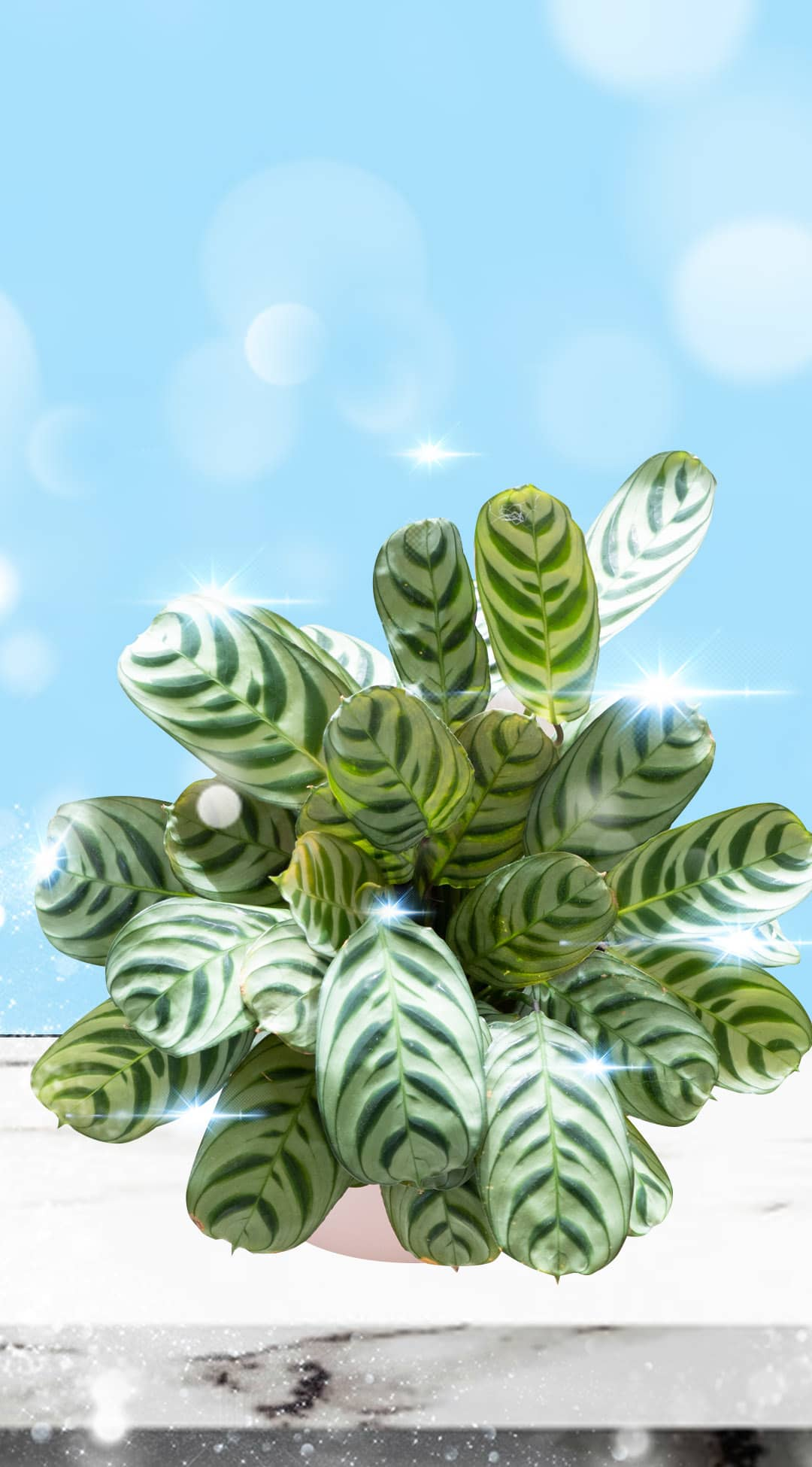 10 Non-Toxic House Plants Safe For Pets and Kids - THE SOWELL